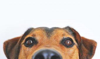close up of a dog's face