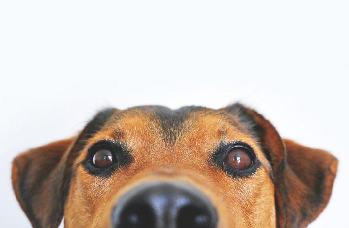 close up of a dog's face